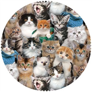 E.E. Schenck, Cat Breeds Multi
